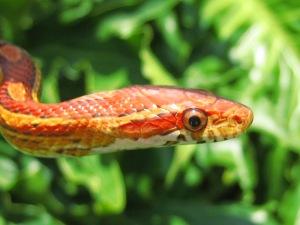 change-snakes